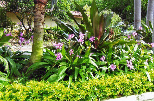 Landscape Design Ideas Pictures sloped landscape design ideas designrulz 14 Tropical Landscape Design