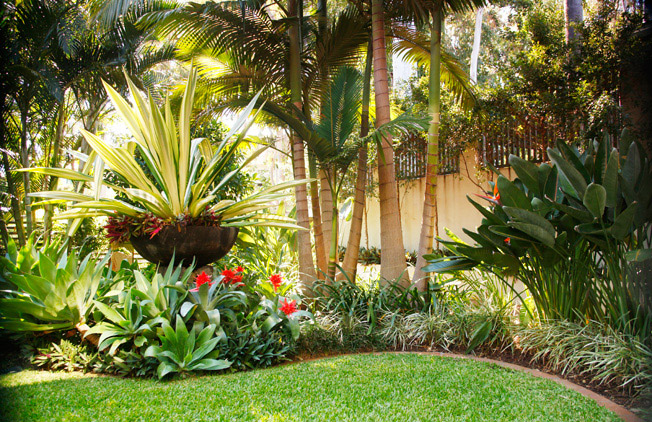Tropical landscape design ideas gardening flowers 101 for Landscape design brisbane
