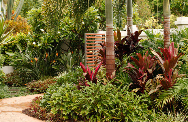 Tropical landscape design ideas gardening flowers 101 for Qld garden design ideas