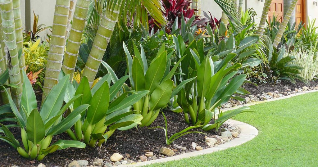 Tropical landscape design ideas gardening flowers 101 for Backyard plant design ideas