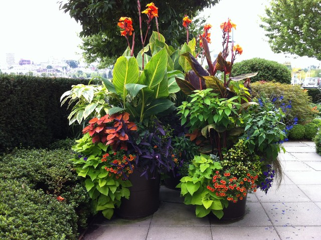 tropical landscape design ideas gardening flowers 101