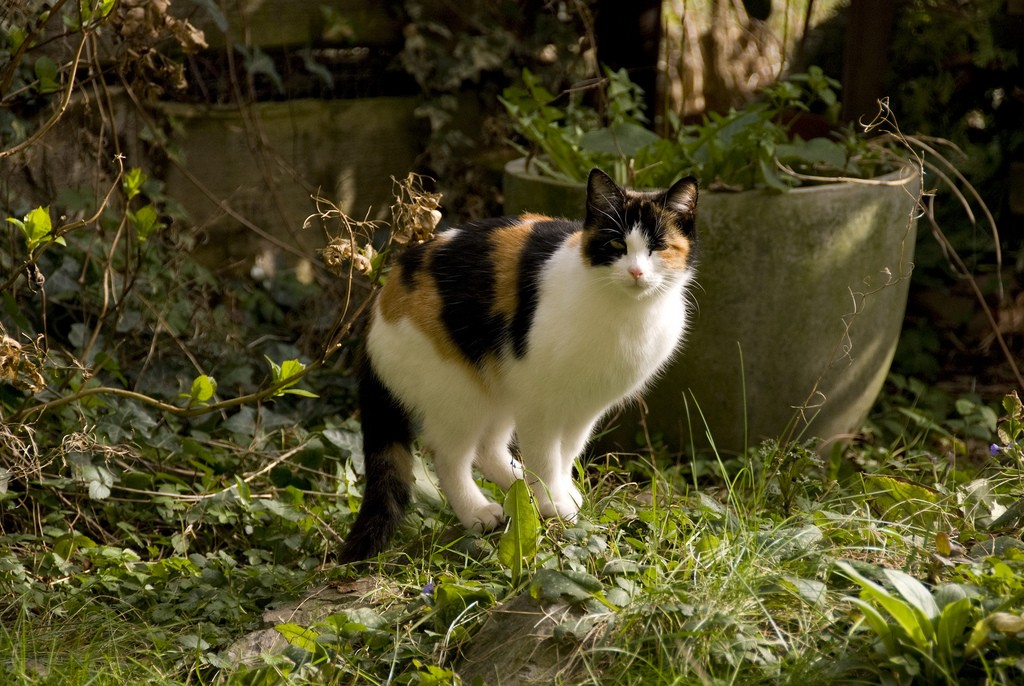 6 Different Ways On How To Keep Cats Out Of Your Garden Gardening Flowers 101 Gardening