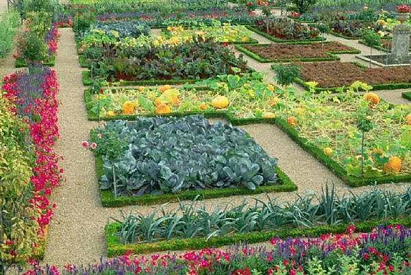 backyard vegetable garden layout  gardening flowers gardening, Garden idea