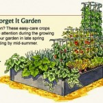 backyard vegetable garden layout plant it and forget it garden