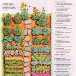 backyard vegetable garden layout grassroots movement