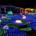 botanical garden lights