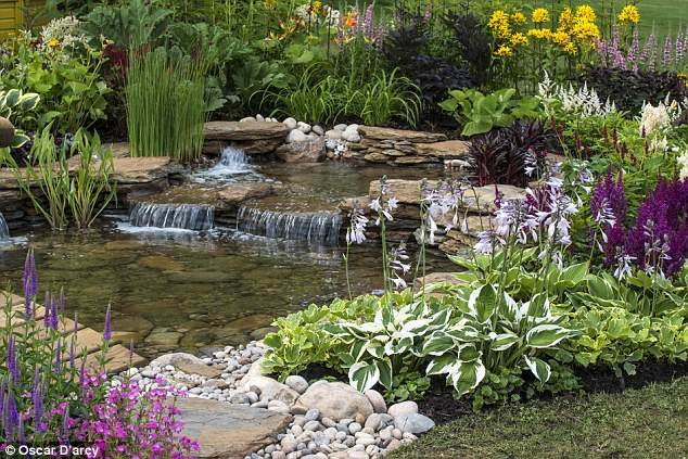 Garden pond ideas natural wildlife gardening flowers 101 for Plants for around garden ponds
