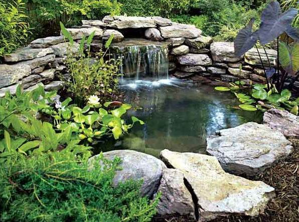 Garden pond ideas waterfall gardening flowers 101 for Garden pond 101