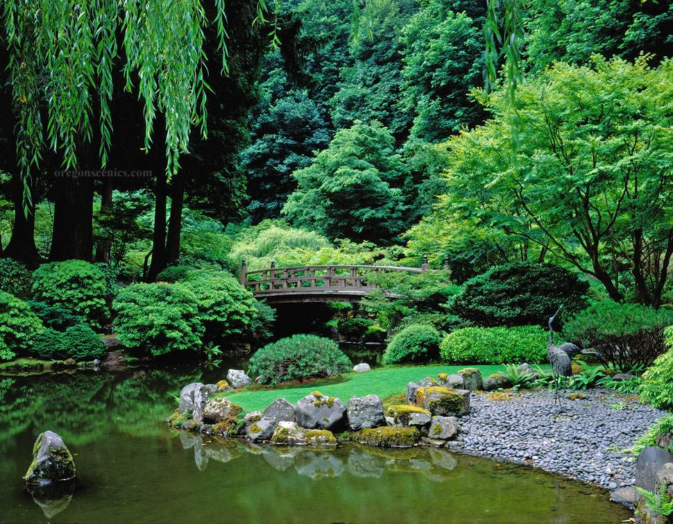 Japanese garden pond pictures gardening flowers 101 for Garden pond 101