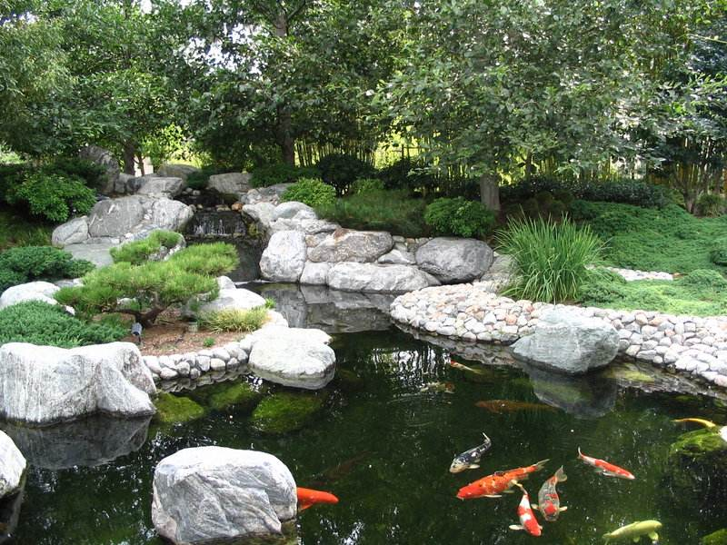 japanese garden pond pictures 616
