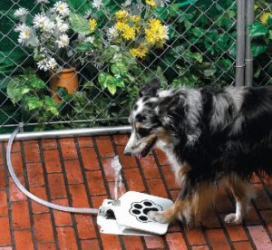outdoor water fountains for dogs