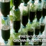 plastic bottle vertical garden