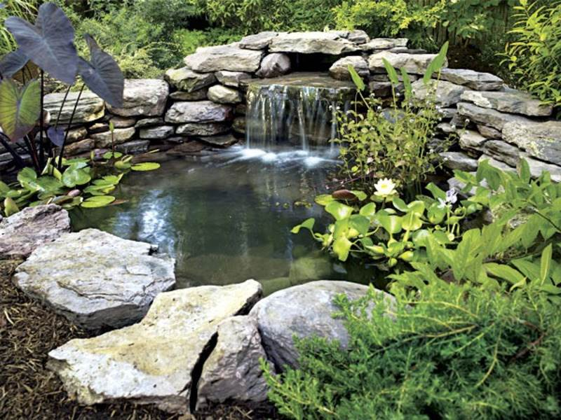 Small garden ponds designs backyard pond gardening for Garden ponds designs pictures