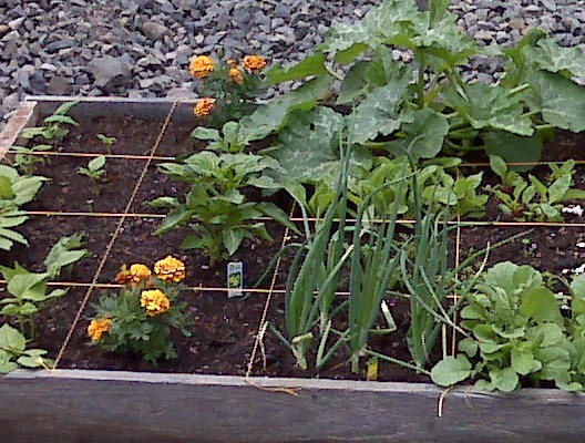 Gardening flowers 101 for Small space vegetable garden design