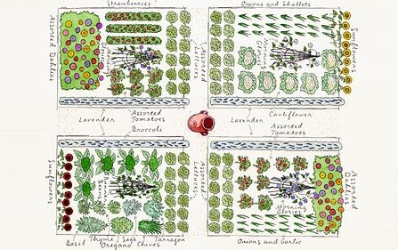 vegetable garden layout spacing best planner app design free