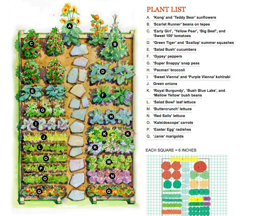 Vegetable garden plans gardening flowers 101 gardening for Large vegetable garden design plans