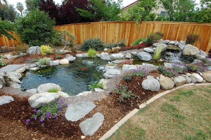 Water garden pond design gardening flowers 101 gardening for Garden pond 101