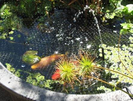 Water garden pond fish gardening flowers 101 gardening for Koi pond plant ideas