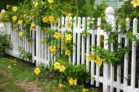 white garden fence ideas